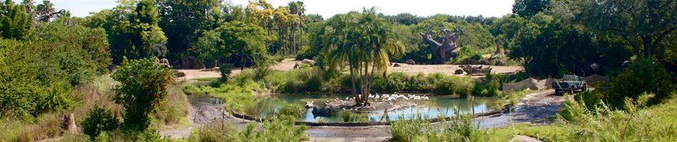 Image of: Tripadvisor Kilimanjaro Safaris Touring Plans Kilimanjaro Safaris Disneys Animal Kingdom